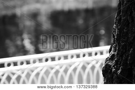 Horizontal black and white right aligned tree with fence bokeh background