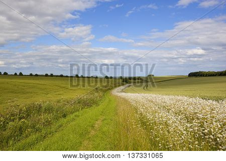 Scenic Footpath With Wildflowers