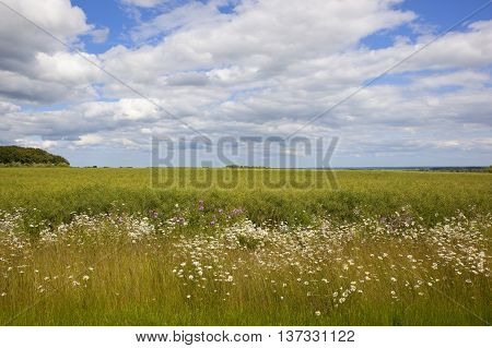 Wildflowers And Canola Crop