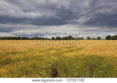 Dramatic Skies Over Barley Field