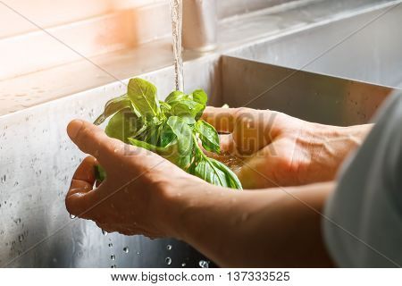 Male hands wash spinach. Spinach leaves washed in sink. Main ingredient for tasty salad. Don't forget to clean products.