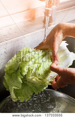 Male hands wash chinese cabbage. Chinese cabbage under water flow. Ingredient for traditional salad. Morning at restaurant kitchen.