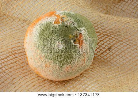Moldy decaying whole uneaten orange on burlap