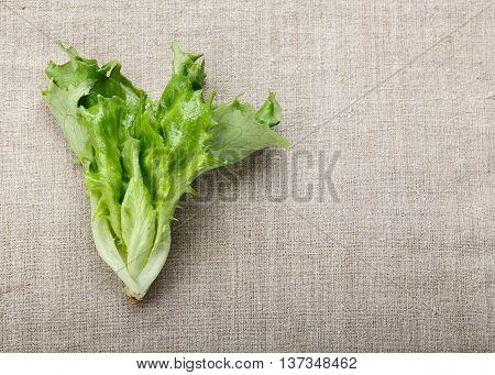 Green Fresh Lettuce