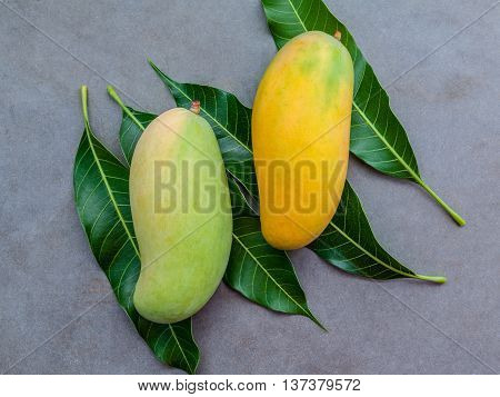 Fresh Organic Traditional Thai Mangoes High Vitamins And Minerals Set Up On Dark Stone Background.