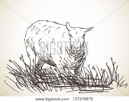 Sketch of sheep, Hand drawn vector illustration