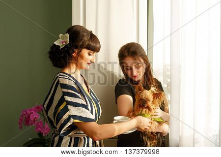 Girl holds a Yorkshire terrier. Two friends and Home pet. Pedigree dog. Funny animals.