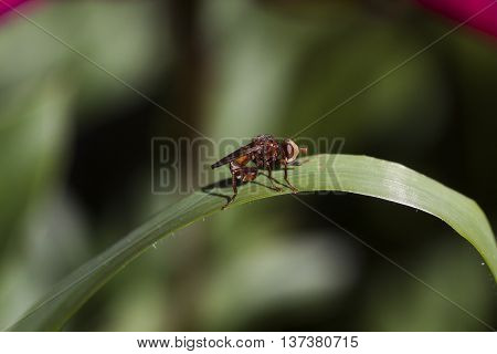 an ugly brown insect on a leaf