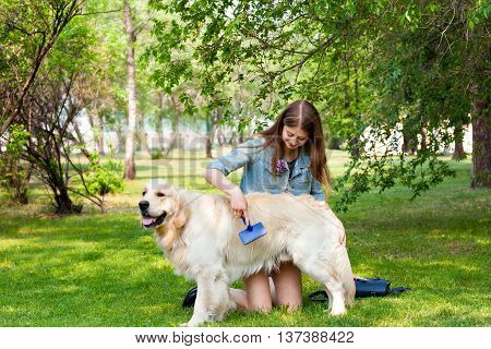 A young girl cares for dog fur outdoors. The content of Labrador. The owner of a pure breed dog fur golden retriever. The pleasure and the joy of hygiene.