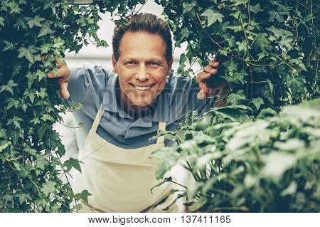Hello! Handsome mature man holding a potted plant and smiling at camera while standing in green house