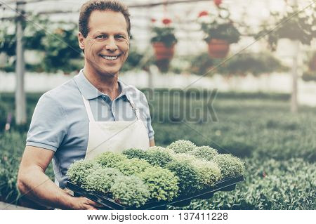Enjoying his work. Handsome mature man holding a potted plant and smiling at camera while standing in green house