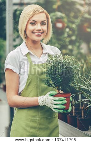Working with plants. Beautiful young woman in apron holding a potted plant and smiling while standing in a greenhouse