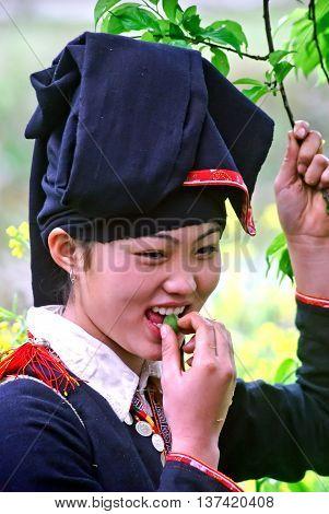YEN BAI, VIETNAM, January 14, 2016 the girl, ethnic Dao, highland Yen Bai. Plum fruit, orchard in spring