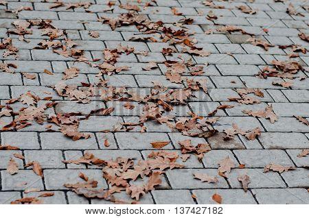 Geometry pattern of cobblestone pavement texture, various colors