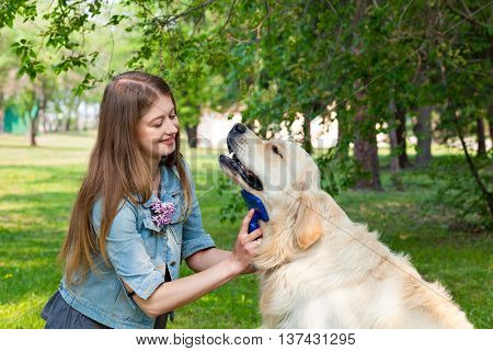 The content of Labrador. The owner of a pure breed dog fur golden retriever. The pleasure and the joy of hygiene.A young girl cares for dog fur outdoors.