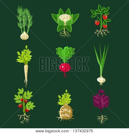 Fresh Vegetable Plants With Roots Collection In Realistic Cartoon Cool Flat Vector Design Isolated On Black Background