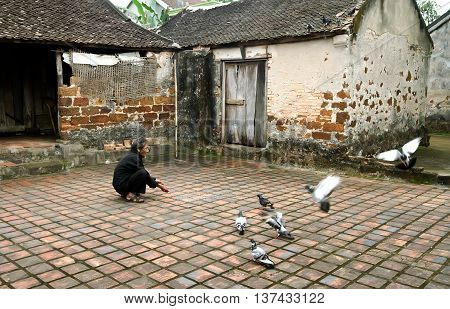 PHU THO, VIETNAM, May 18, 2016 Elderly man, countryside, Phu Tho, Vietnam. pigeon breeding herd, simple housing