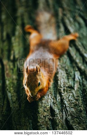 squirrel eating a nut on a tree