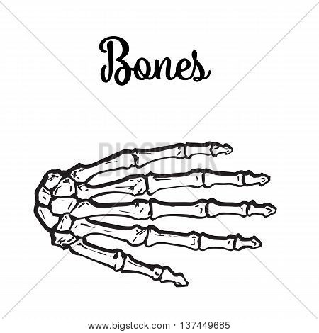 bones of the human hand brushes, vector illustration sketch drawn by hand, isolated on white background