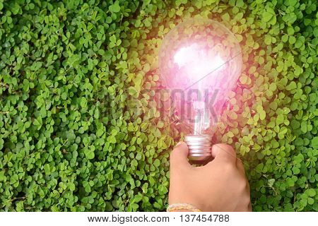 bulb in hand on the green grass
