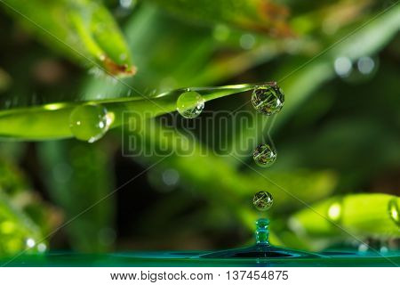 Dew drops from green leaves of grass nature background.