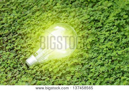 green light bulb on the green grass