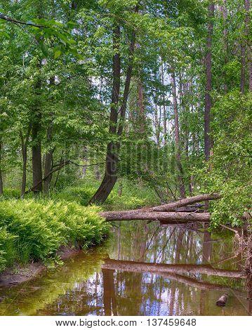 Reflections along the bank of the Little Cedar River near Gladwin Michigan.