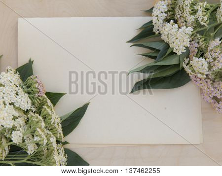 Yarrow medicinal plant on rough paper and wooden background. Achillea millefolium flower mockup