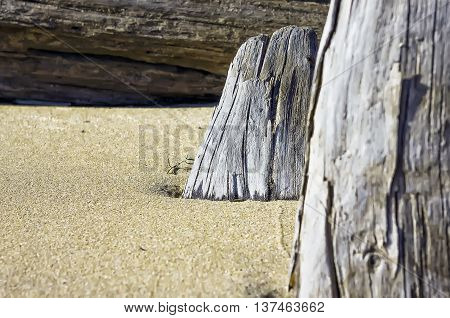 Parts of dry weathered wood closeup stick out of beach sand. Abstract background with space for copy and selective focus.