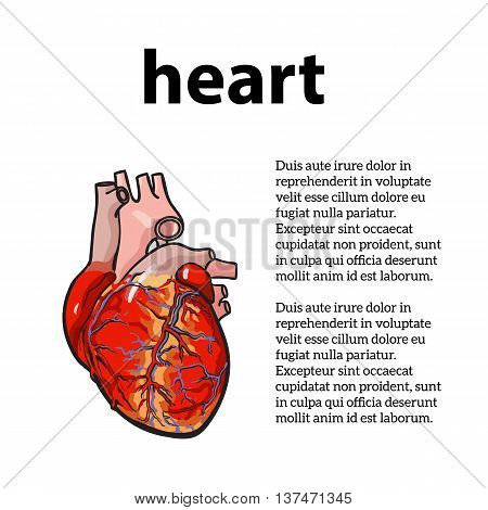 anatomical human heart, sketch hand-drawn illustration isolated on white background, sketch the human heart, the concept of heart disease with information about heart disease