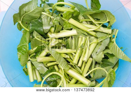 water spinach : Ipomoea aquatica is a semiaquatic tropical plant grown as a vegetable for its tender shoots and leaves. It is found throughout the tropical and subtropical regions of the world although it is not known where it originated.