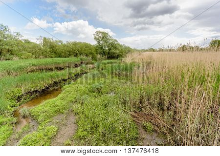 Landscape at river Elbe with cloudy sky