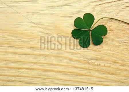 Clover leaf on wooden background