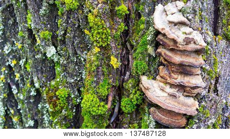 the old large dark gray stump grow moss green and fluffy brown mushrooms parasites brown shades, close-up