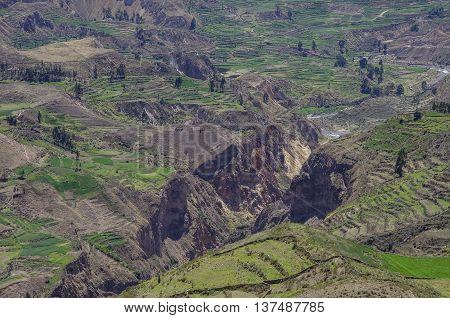 Colca Canyon panorama, Peru,South America. Incas to build Farming terraces.