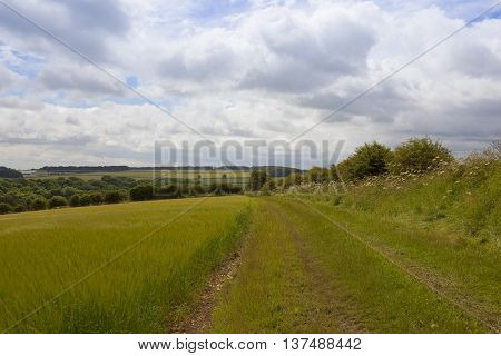 Bridleway Through Agriculture