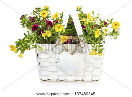 White gift basket with heart-shaped pendant filled with yellow and purple millionbells flowers isolated on white background