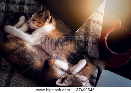 Soft Image Sleeping Baby Cat And Red Cup Coffee With  Laptop And  Tablet On Black Table.