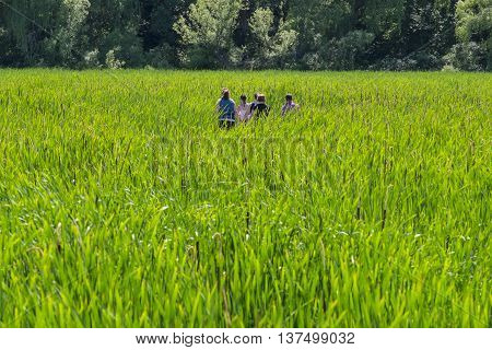 Back View of People Walking Through a Marsh Backlit