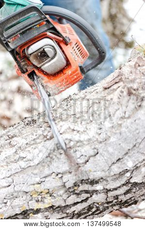 Close-up Of Chainsaw Cutting Trees And Firewood For Winter With
