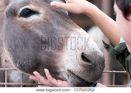 A shot of a donkey caressed by human hands