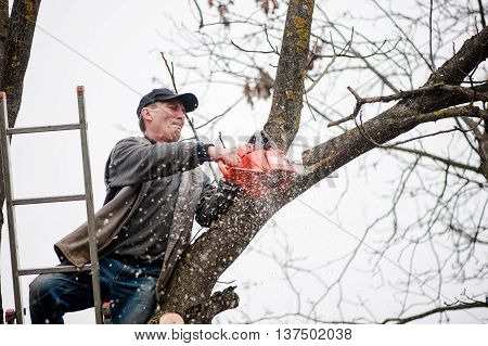 Man Cutting Tree Using A Gasoline Powered Chainsaw From Top Of L