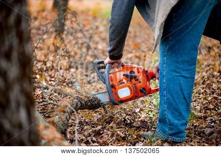 Worker With Chainsaw Cutting Firewood In Forest