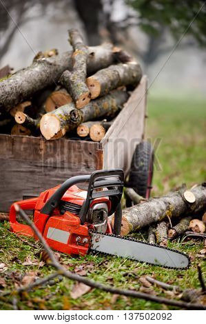 Gasoline Powered Chainsaw And Pile Of Wood In Forest