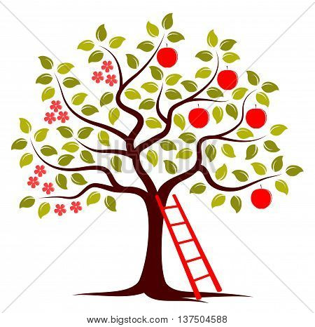vector apple tree in two seasons and ladder isolated on white background