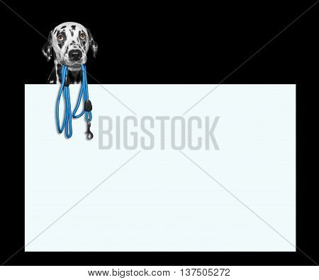 Dog is holding the leash in its mouth -- isolated on black next to the frame