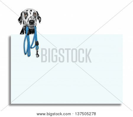 Dog is holding the leash in its mouth -- isolated on white next to the frame