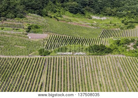 TRITTENHEIM GERMANY - JUNE 19 2016: green vineyards called Trittenheimer Apotheke at the river Moselle in summer in Trittenheim Germany