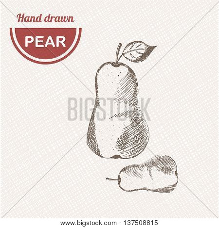 Sketches pear composition. Hand drawn pear. Vintage sketch style illustration.