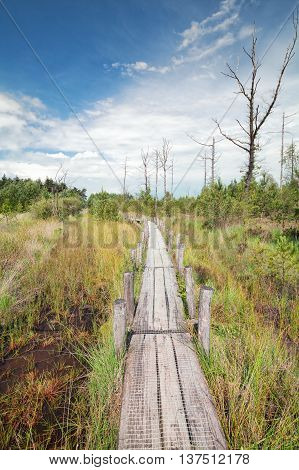wooden path on the swamp during sunny day